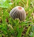 Fungi (30375557745).jpg
