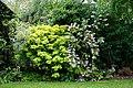 Garden shrub border at Boreham, Essex, England 02.jpg
