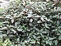 Gardenology-IMG 4889 hunt10mar.jpg