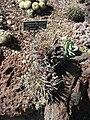 Gardenology.org-IMG 0432 hunt07mar.jpg
