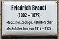 Gedenktafel Kirchplatz (Wittenberg) Friedrich Brandt.jpg