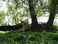 Gelderse Poort Bemmel PM16-07.jpg