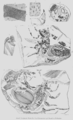 Geology and Mineralogy considered with reference to Natural Theology, plate 46'.png