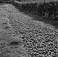 Geoogste appels, Bestanddeelnr 252-0219.jpg
