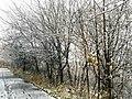 Georgia snow IMG 4157 (38887913862).jpg