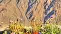 Gergetis flowers (11658070335).jpg