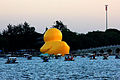 Gfp-beijing-summer-garden-palace-large-duck-rear-end-on-lake.jpg
