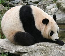 Bears: Polar, Grizzly Bear, Panda,.