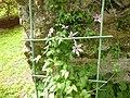 Giardino di Ninfa 118.jpg