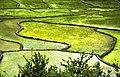 Gilan - Tutkabon - Sendes - panoramio.jpg