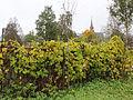 Gjesvål hop garden I.jpg