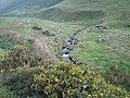 Gorse and stream in Nant Braich-y-rhiw - geograph.org.uk - 238327.jpg