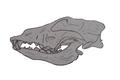 Goyet cave canid skull full.png