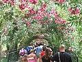 Granada - Giardini del Generalife - panoramio.jpg