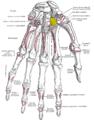 Gray219 - Trapezoid bone.png