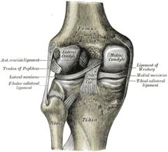 Menisco Anatomía Wikipedia La Enciclopedia Libre