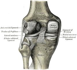 Разгибание в коленном суставе производит медицина.разрыв связок коленного сустава лечение