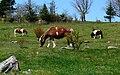Grayson Highlands Ponies-27527-2.jpg