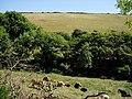 Grazed Valley - geograph.org.uk - 222056.jpg