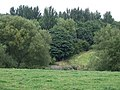 Grazing Land and Woodland near Alsager, Cheshire - geograph.org.uk - 576555.jpg