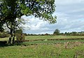 Grazing Land near Sandon, Staffordshire - geograph.org.uk - 591615.jpg