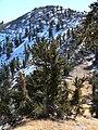 Griffith Peak 6.jpg