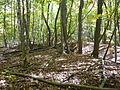 Griffy Woods - P1100487.JPG