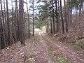 Grigiškės, Lithuania - panoramio (150).jpg