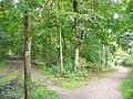 Grunewald - Waldweg (Woodland Paths) - geo.hlipp.de - 42179.jpg