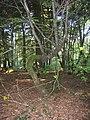 Guéret - forêt de Chabrières (09).jpg