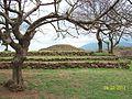 Guachimontones Ruinas Arqueologicas perspectivas.JPG