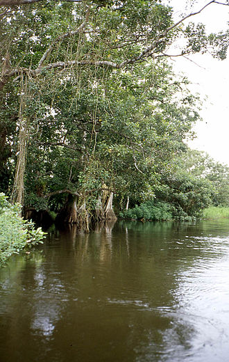 Protected areas of Nicaragua - A river along the Los Guatuzos Wildlife Refuge