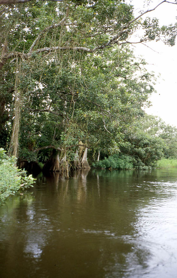 Los Guatuzos Wildlife Refuge