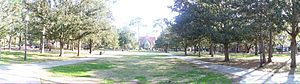 University of Florida Campus Historic District - Looking south across the plaza, towards the Auditorium