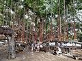 HI Maui Lahaina Banyan Tree Park1.jpg