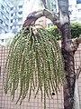 HK 西營盤 Sai Ying Pun 第三街遊樂場 Third Street Playground 公園 LCSD park green plants n trees August 2017 Lnv2 05.jpg