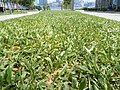 HK Admiralty Tamar Park green grass Sept-2012.JPG