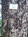 HK CWB 銅鑼灣 Causeway Bay 維多利亞公園 Victoria Park tree trunk n green leaves December 2019 SSG 42.jpg