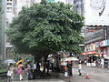 HK Central Queen's Road C raining trees.JPG