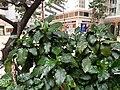 HK SPK 新蒲崗 San Po Kong 彩頤花園 Rhythm Garden n shopping mall December 2020 SSG 03.jpg