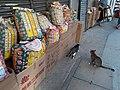 HK SYP 西環 Sai Ying Pun 皇后大道西 Queen's Road West shop n cats April 2020 SS2 06.jpg