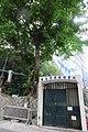 HK Sheung Wan New Street banyan tree 樂善堂梁銶琚書院 Lok Sin Tong Leung Kau Kui College April 2018 IX2 03.jpg