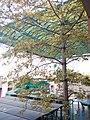 HK TSW 天水圍體育館 Tin Shui Wai Sports Centre tree crown Dec 2016 Lnv2.jpg