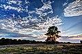 Haltern am See, Westruper Heide -- 2015 -- 7990-4.jpg