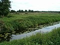 Ham Wall Nature Reserve - geograph.org.uk - 230999.jpg