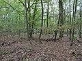 Hambach forest 01.jpg