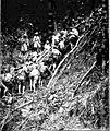 Hauling the mountain guns 1900s.jpg