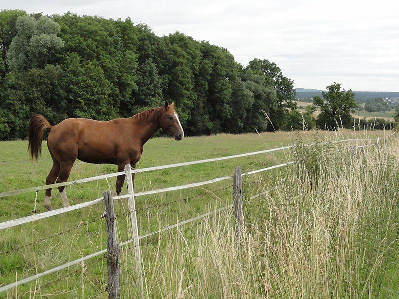 Haussonville (M-et-M) paysage avec chevaux