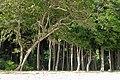 Havelock Island, Forest on the beach 2, Andaman Islands.jpg
