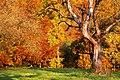 Herbsttraum... - panoramio.jpg